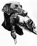 Labrador Retriever aus Lühlsbusch